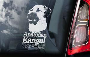 Anatolici-Kangal-On-Board-Auto-Finestrino-Adesivo-Cane-Firmare-Regalo-V01