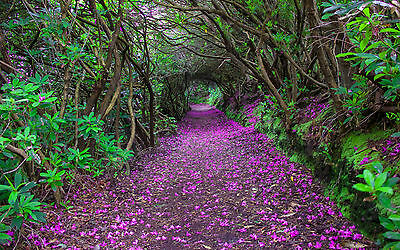 Framed Print - Purple Petals on the floor of a Tree Tunnel (Picture Poster Art)