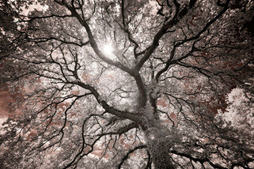 PHOTO ART PRINT Ethereal Tree by Michael Hudson 13x19 Tree Photograph Poster