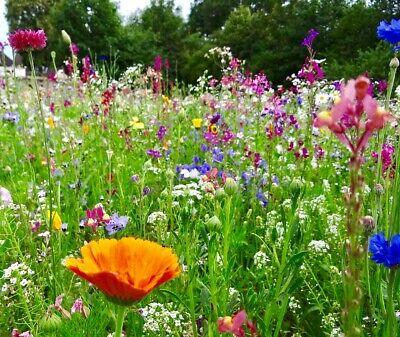 Blumenwiese Bl/üten Saatgut mehrj/ährig Spezielle Artenauswahl je nach Region 50g Biobalu Bienenweide