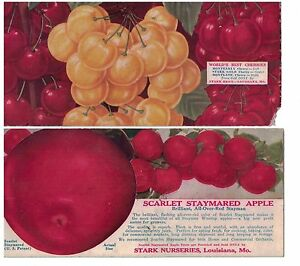 1930s-40s Fruit Themed Ink Blotters Apple Variety and Cherry Varieties