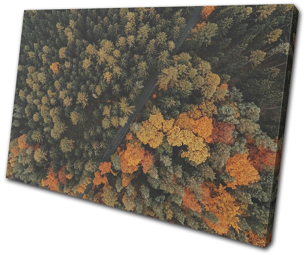 Forest Trees Autumn Landscapes SINGLE TELA TELA TELA parete arte foto stampa 415171