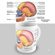 Skull Anatomy Novelty Educational Mug Tea Coffee Gift Office Cup