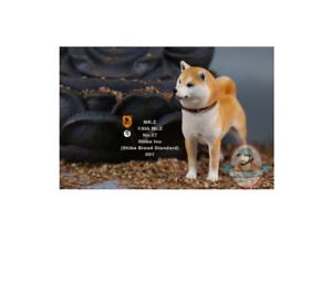 1 6 Mr.Z animal model Japanese Shiba Inu MRZ027 001