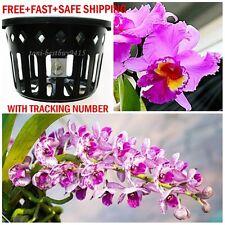 "3 Vanda Orchid Mesh Net Pot Basket Cup 6"" Round Hanging Phalaenopsis Paphiopedil"