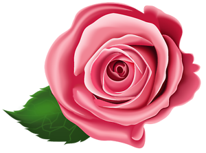 24 X PINK ROSES FLAT CAKE TOPPER//DECORATION WAFER PAPER