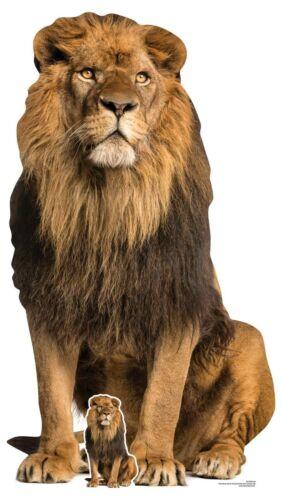 Lion Big Cat Lifesize and Mini Cardboard Cutout Standup Safari Standee