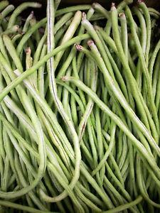 50 Yard Long Cowpea Bean Seeds | Heirloom Non-GMO Variety