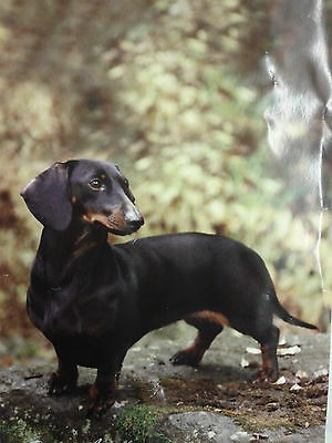 Dachshund House Banner Best of Breed Augello Double Layered