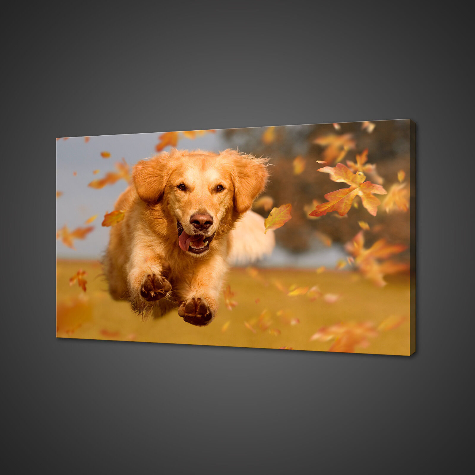 BEAUTIFUL GoldEN RETRIEVER DOG JUMPING CANVAS PRINT WALL ART PICTURE PHOTO