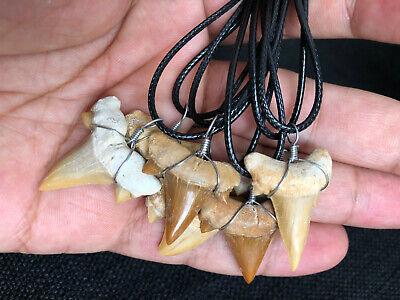 Dino Zahn Haifischzahn Anhänger Kette 100/% Echt Fossill ca. 45-75 Mil. Jahre