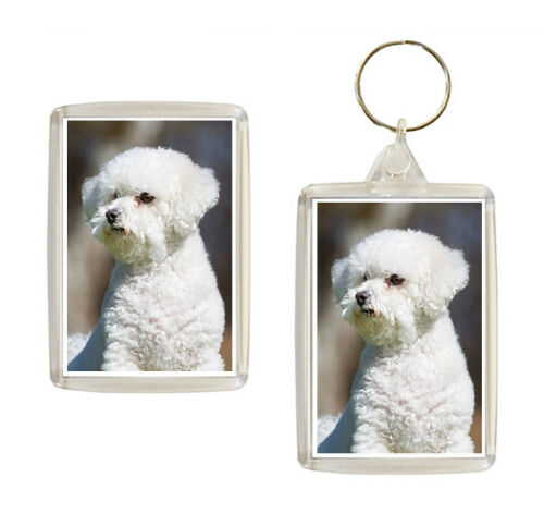 Bichon Frise Dog Fridge Magnet Keyring Novelty Gift