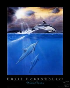 NEW-Dolphins-II-16x20-034-Art-Print-Poster-by-Dobrowolski