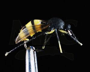 1-Size-12-True-Wasp-Montana-Fly-Company-Realistic