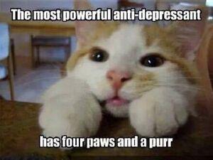 "Funny Cat  refrigerator magnet 3 1//2 x  4 1//2/"""