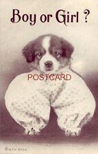 1910 BOY OR GIRL? dog in baby pajamas