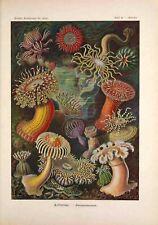 A1 A3 Ernst Haeckel Biology Print  A0 A4 GLOSSY Wall Photo Poster A2