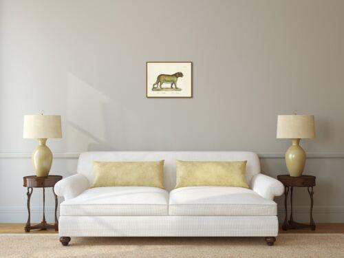 Leopard Felis Pardus Der Panther old antique engraving print 1816 art poster