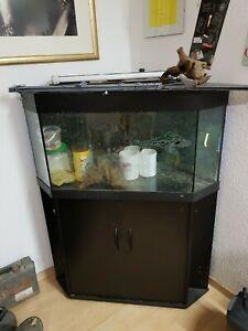 Aquarium Von Der Konsumierenden öFfentlichkeit Hoch Gelobt Und GeschäTzt Zu Werden Fische & Aquarien