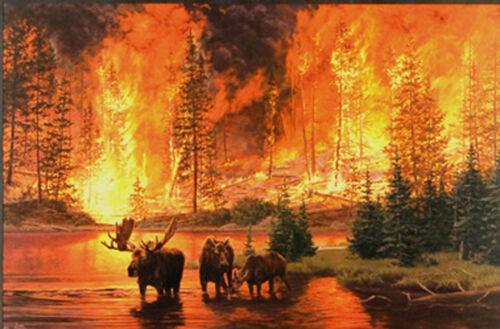 Legacy Jim Tschetter Moose Wildlife Forest Fire Art Print Poster