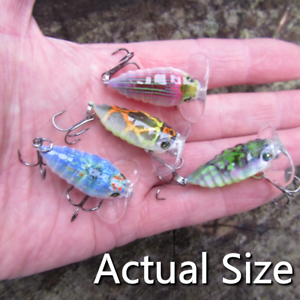 4-Proberos-Jitterbug-insect-creature-bait-surface-fishing-popper-pike-lure-gear