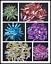 Colorful-titanium-rainbow-aura-lemurian-quartz-crystal-point-50g thumbnail 1