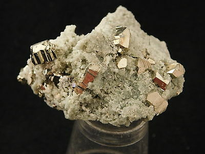 Lots of Very Well Formed PYRITE Crystals! in a Small Cluster! Bulgaria 30.2gr