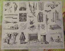 ART PRINT ON ORIGINAL ANTIQUE BOOK PAGE 1928 Apiculture Abeille Ruche Cellules