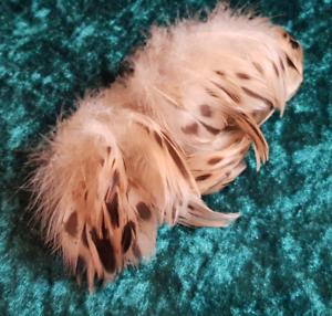 100-Vogelfedern-Ente-Rupf-natur-weiblich-3-7-cm
