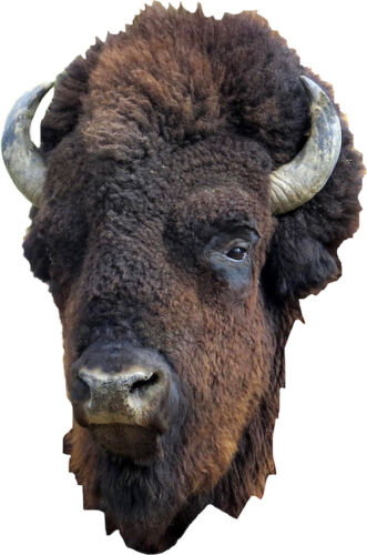 a16 Bison Head Wall Decal Mural Hunting Wild Animals Removable Buffalo Vinyl