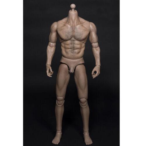 1//6 Scale Wolverine Brustbehaarung Muskel Herren Körper 31CM