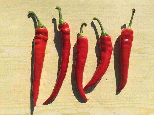 Samen seeds hot Cayenne Red lange Chillies Red Chill Samen Chilli scharf 15 St