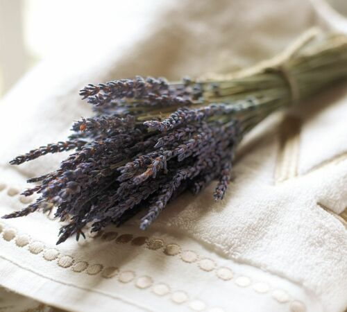 """Stems Beautiful Decorated Smell Good 8/""""-10/"""" Dried Lavender Start with 120"""
