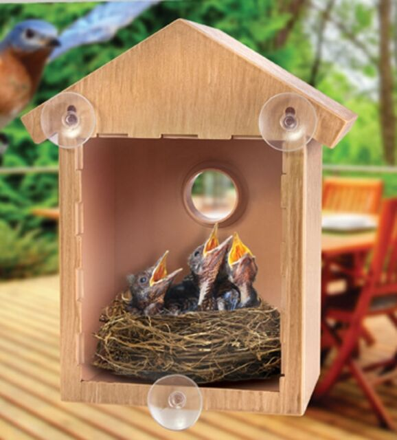 Superior Clear Window Bird Feeder House See Through Nest Viewing Perspex Seed Glass