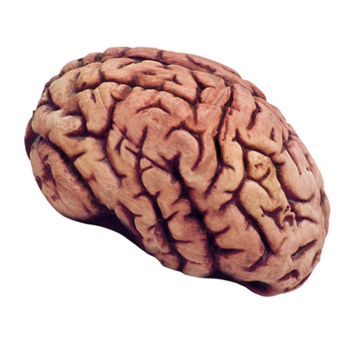 Bloody Fake Plastic Brain Haunted House Spooky Halloween Prop Decor