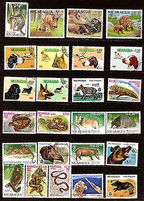 Nicaragua Tiere Wild-,hunde Rasse In Verschiedene G7 Duftendes Aroma Reptilien