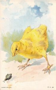 Easter-Chick-on-the-Trail-of-Beetle-Bug-Gray-Litho-1908-Postcard-PC-60