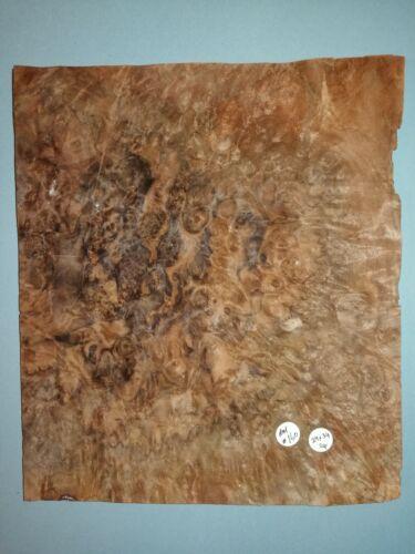 CONSECUTIVE SHEETS OF AMERICAN BURR WALNUT VENEER 29 X 34 cm AM #160 MARQUETRY