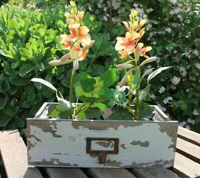 Professioneller Verkauf Auf Alt Gemachte Holz Schublade Pflanzschale Blumen Übertopf Blumenkasten 27cm HüBsch Und Bunt