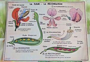 Set-de-table-Affiche-Scolaire-la-Fleur-la-Fecondation-Fructification