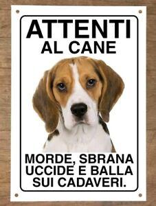 BEAGLE-Attenti-al-cane-morde-sbrana-uccide-e-balla-sui-cadaveri-20-30cm