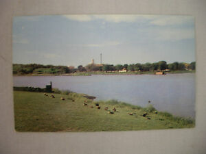 VINTAGE-PHOTO-POSTCARD-A-VIEW-OF-DUCKS-ON-SILVER-LAKE-AT-ROCHESTER-MINNESOTA