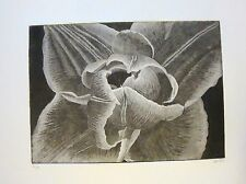 COMPOSTELLA TULIP  - LIMITED EDITION SIGNED ETCHING by Studio Angela