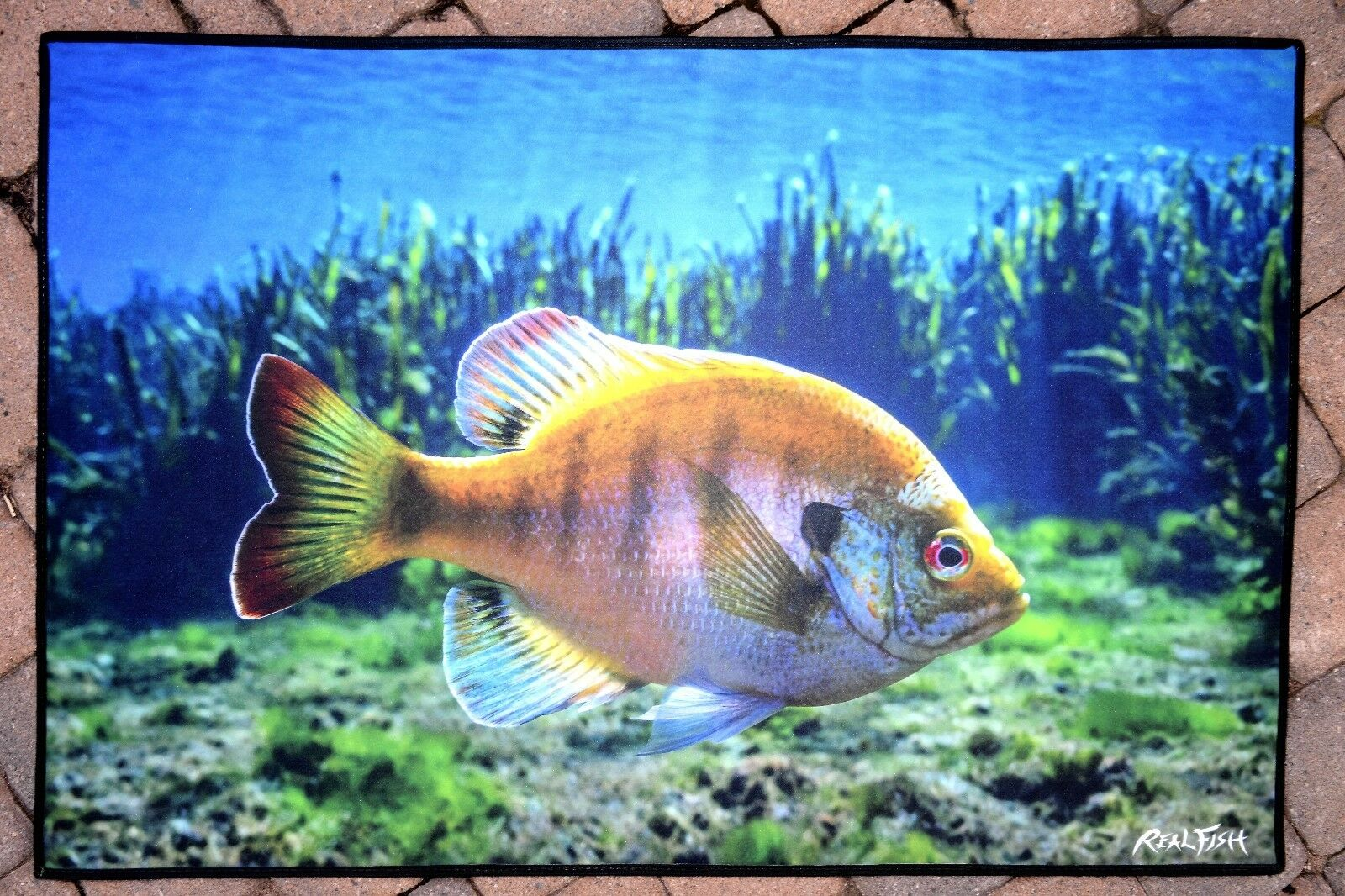 "Realfish Inland Series /""  Northern Pike /"" Fish Mat Floor May Doormat 24x36"