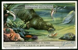 WALRUS-Sea-Ocean-Mammal-60-Y-O-Ad-Trade-Card