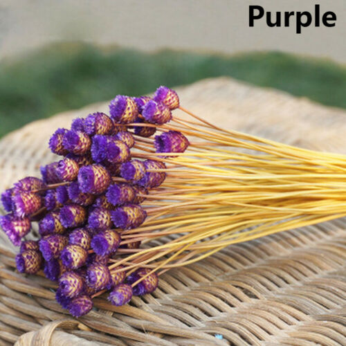 50pcs Natural Material Kawaii Happy Flower Real Flower Dried Flowers Bouquets