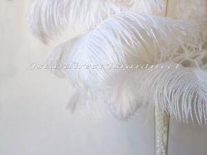 """50 Piece Set White Ostrich Feathers For Wedding Birthday Centerpiece 8""""-24"""" USA"""