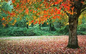 artwork for wall decoration tree forest nature landscape art poster US Seller