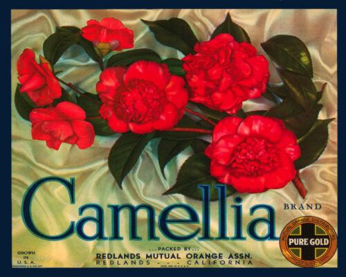 Vintage Decoration /& Design QUALITY Poster.Camellia Flower.Room Decor.330