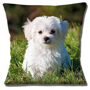 Details about CUTE BICHON FRISE PUPPY DOG TRIMMED PHOTO PRINT DESIGN 16